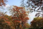 20081015_nasu15.jpg