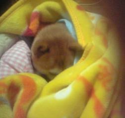 暖か睡眠2