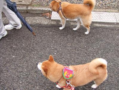 20日 タロウちゃんと散歩