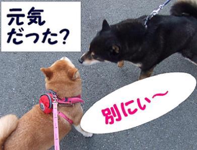 22日 コテちゃん3