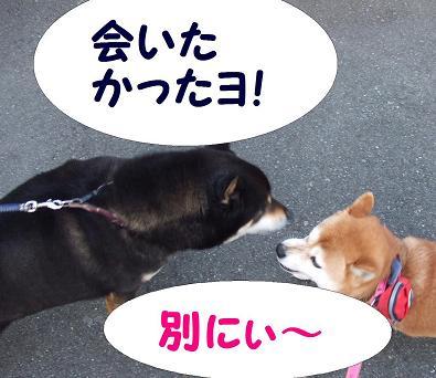 22日 コテちゃん4