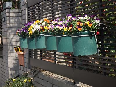 2008_03233月23日 コテツ・広場・花0061
