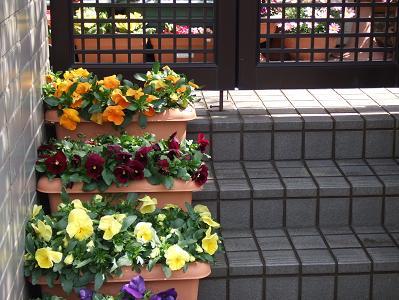 2008_03233月23日 コテツ・広場・花0063