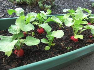 みに菜園2