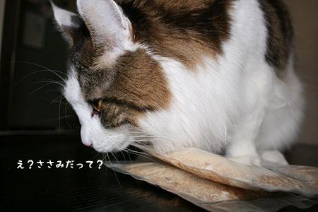 20080116094134.jpg