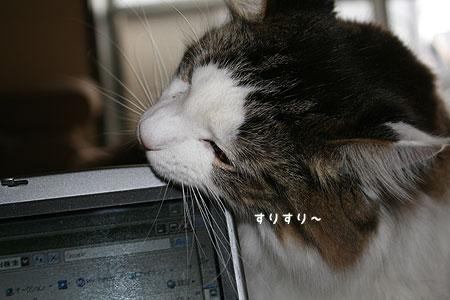 20080121080356.jpg