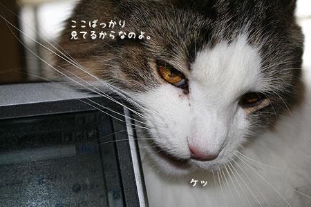 20080121081719.jpg