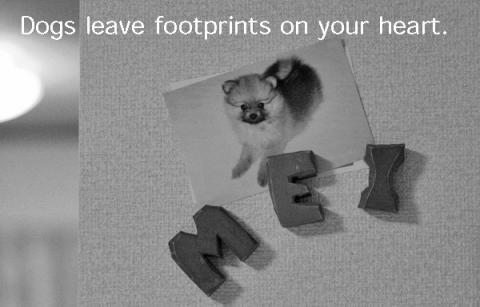 「心に足跡を残す犬たち」