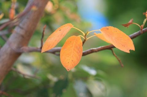 秋色みつけた・・・