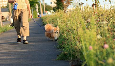 一緒に歩く道