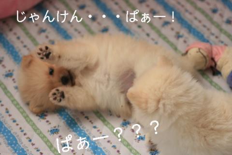 じゃんけんぱぁblog