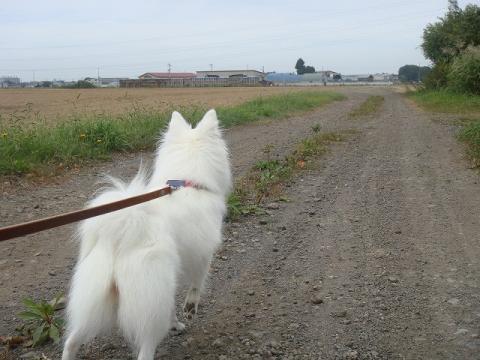 収穫終わった玉ねぎ畑blog