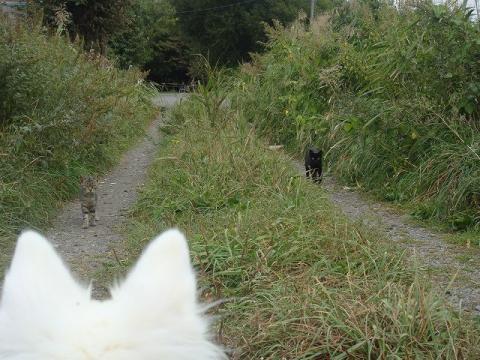 猫との遭遇blog