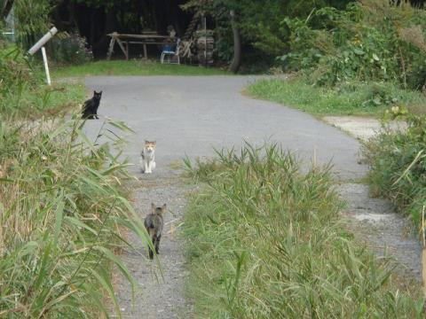 猫帰るblog