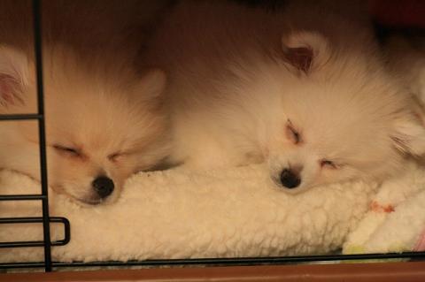姉妹で・・おやすみ~。