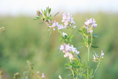 秋の花blog