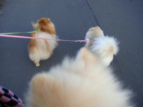 4ワンで、散歩中。