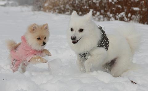 冬も元気で遊ぼうね♪