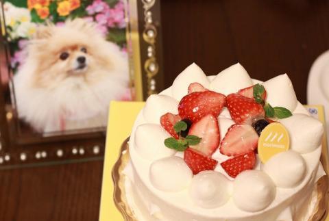 とうさんの誕生日blog