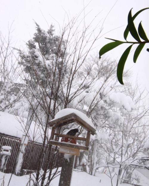 吹雪の裏庭。。。