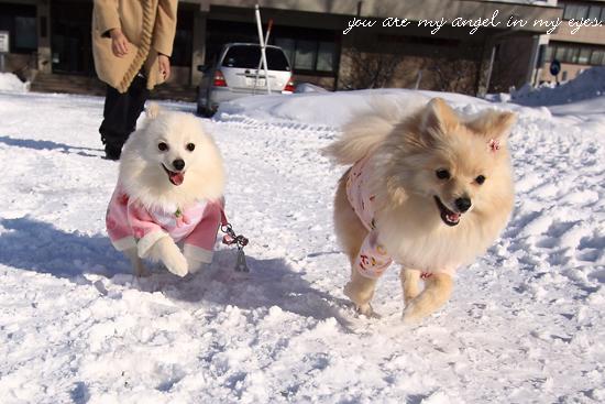 可愛い天使たち、がんばってね!
