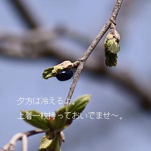 IMG_772300.jpg