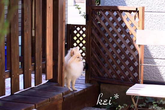 keiも・・・トリミングだね。