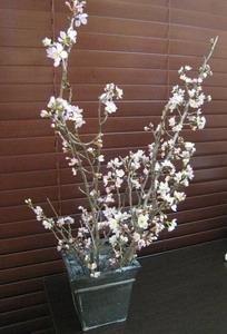 桜 見ごろ