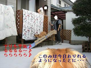 CIMG0002_20080923200337.jpg