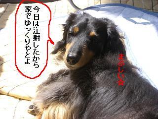 CIMG0002_20090502154712.jpg