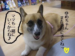 CIMG0008_20080923201128.jpg