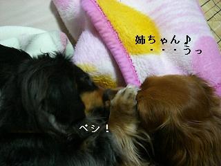CIMG0029_20090124200516.jpg