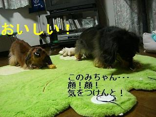 CIMG0060_20080928204206.jpg