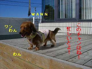 CIMG0067_20081208195435.jpg