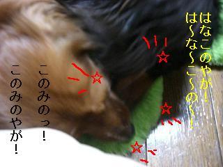 CIMG0075_20080930205312.jpg