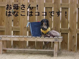 CIMG0077_20090125174556.jpg