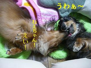 CIMG0085_20080930205321.jpg