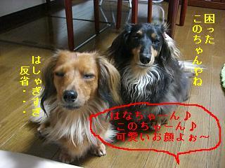 CIMG0093_20080930205341.jpg