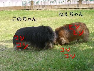 CIMG0095_20090517204744.jpg