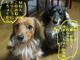 CIMG0096_20080930205400.jpg