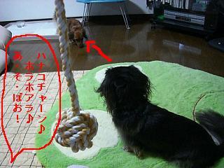 CIMG0096_20081213201434.jpg