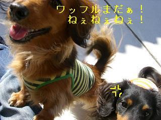 CIMG0109_20090131195810.jpg