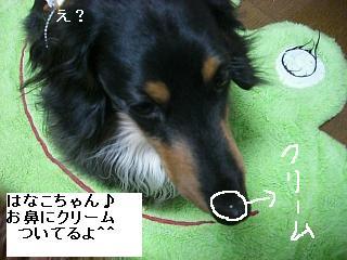 CIMG0120_20090430220449.jpg