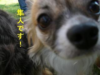 CIMG0123_20090524184039.jpg