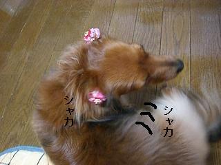 CIMG0128_20090201194919.jpg