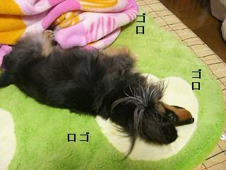 CIMG0129_20090201195053.jpg