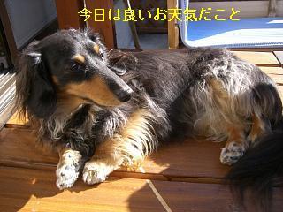 CIMG0133_20081227194648.jpg