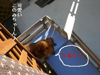 CIMG0134_20081227194736.jpg