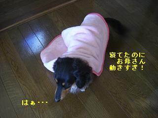 CIMG0135_20081227194847.jpg