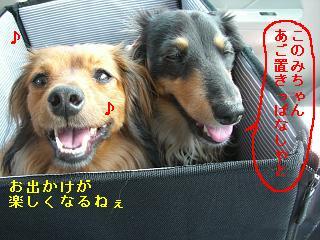 CIMG0135_20090524190923.jpg
